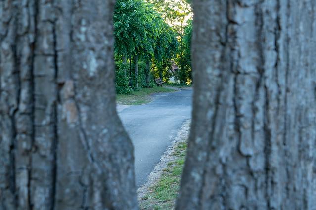 Passe partout tree