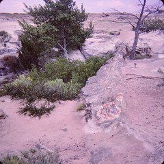 Petrified Forest National Park - Agate Tree