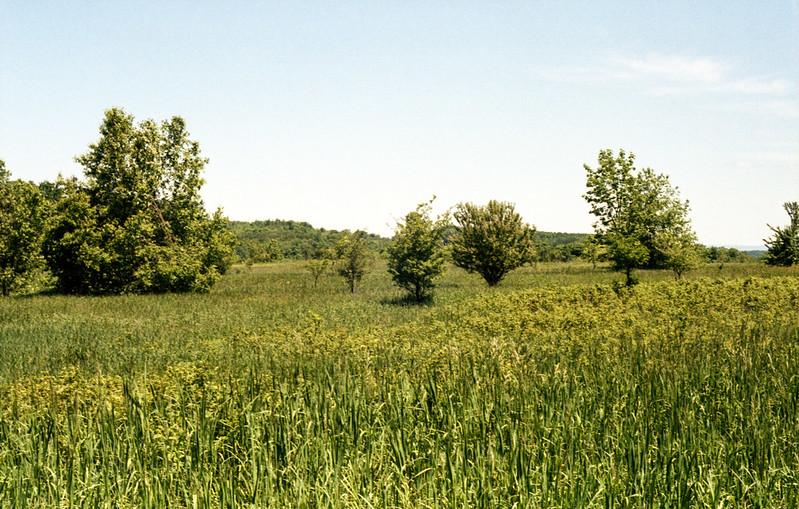 Mono Cliffs Meadow Two