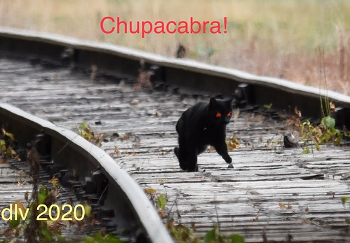 Just for Fun- Chupacabra | by dlv1