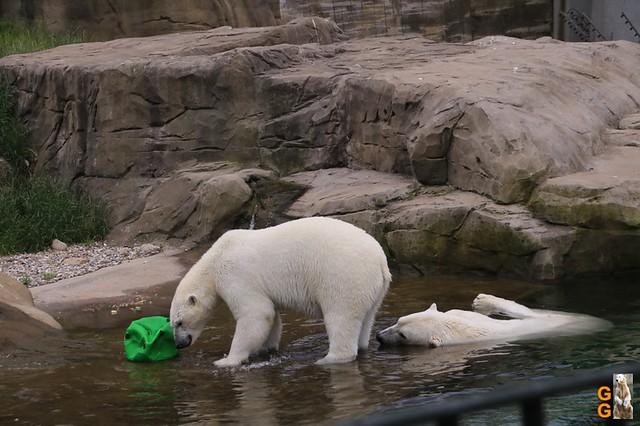 Zoo Rostock 13.+14.06.20 Bulk Watermark
