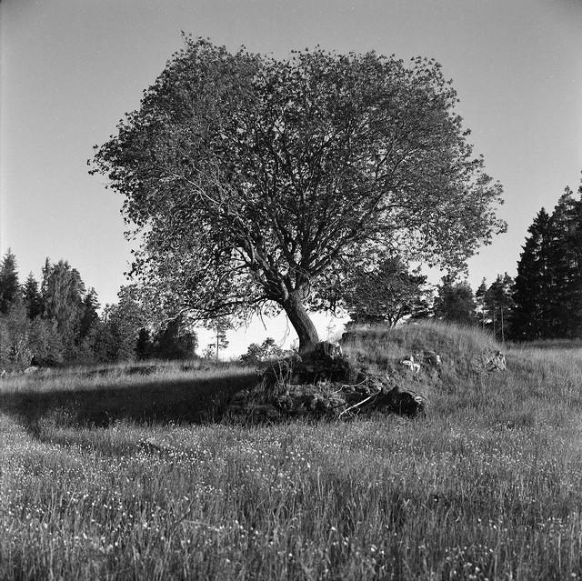 En gammel jordkælder