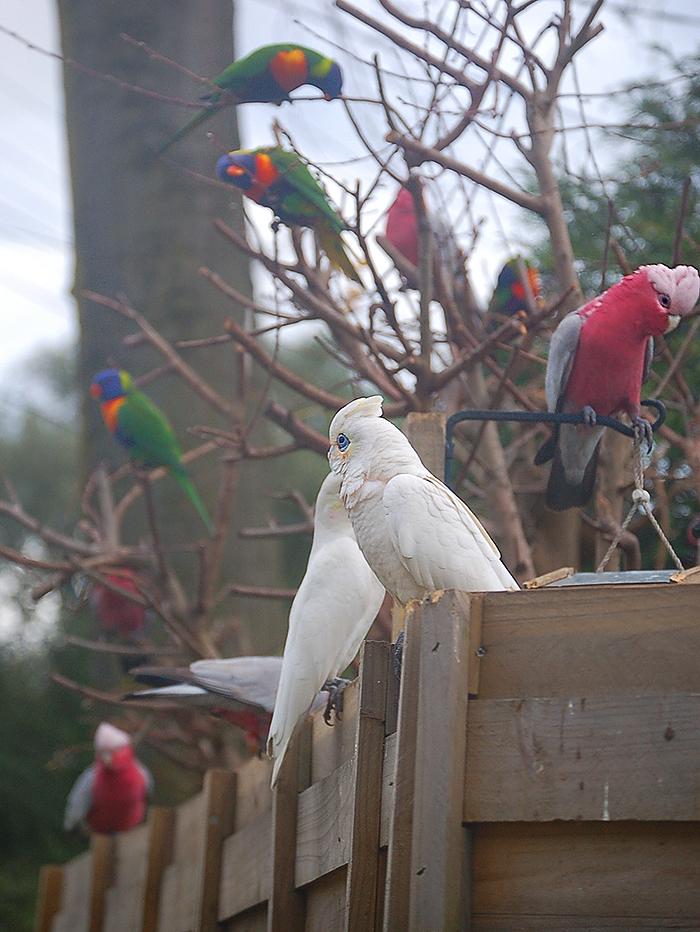 _mixed_parrots_3_