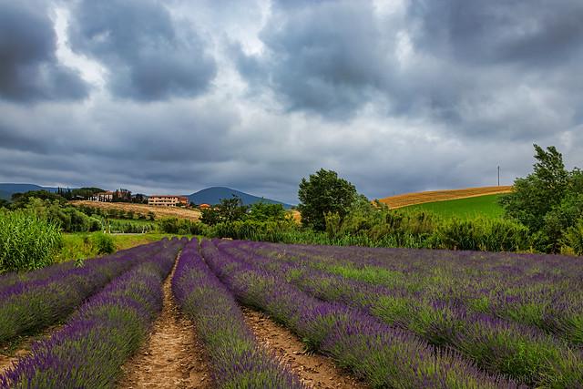 Anche le nuvole profumano di lavanda.- Even the clouds smell of lavender.