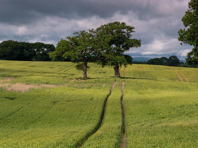 Tree Tracks