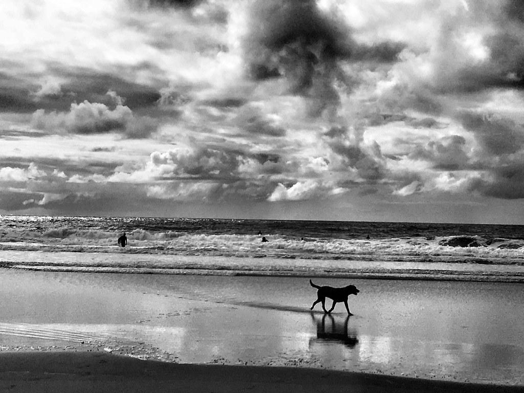 Quem caminha no balanço do mar num baque só? 🎧