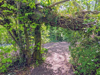 Wooded walkway in Howick, Preston | by Tony Worrall