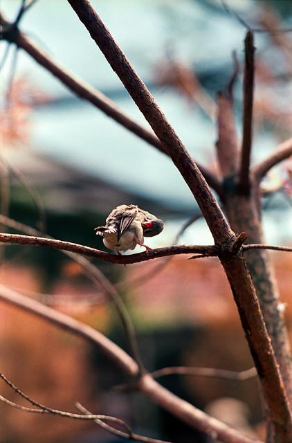 Bird back