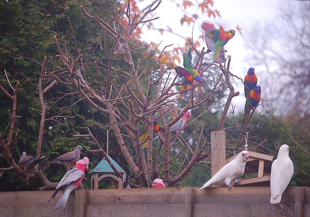 _mixed_parrots_6_