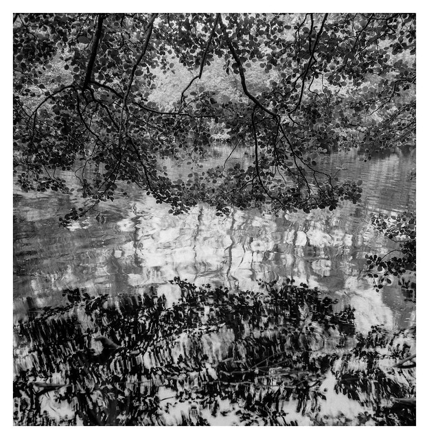 Branches reflected at water's edge