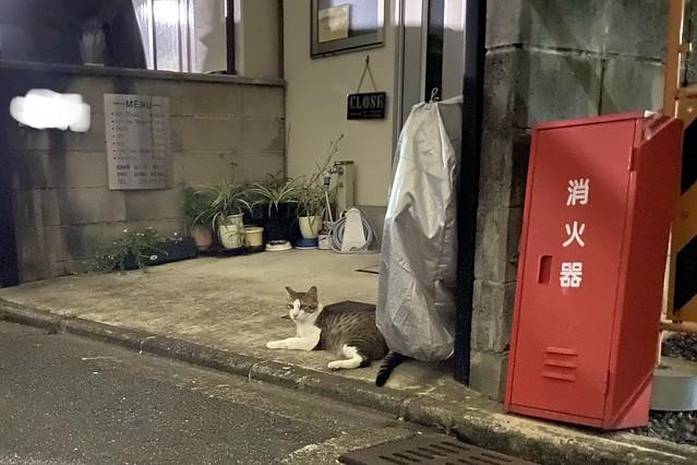 Today's Cat@2020ー06ー27