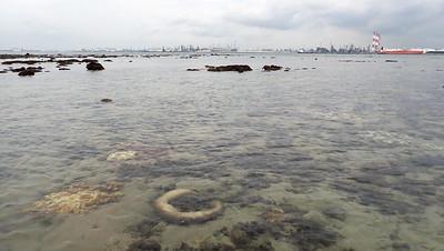 Living reefs of Cyrene, Jun 2020