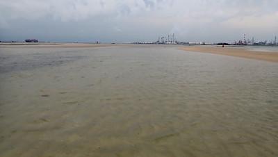 Seagrasses at Cyrene, Jun 2020