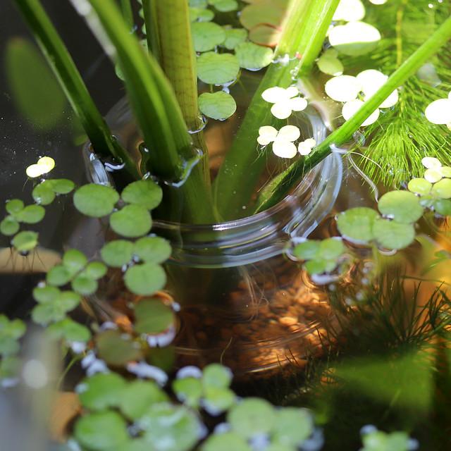 2160x2160 Mini Pond 20200626