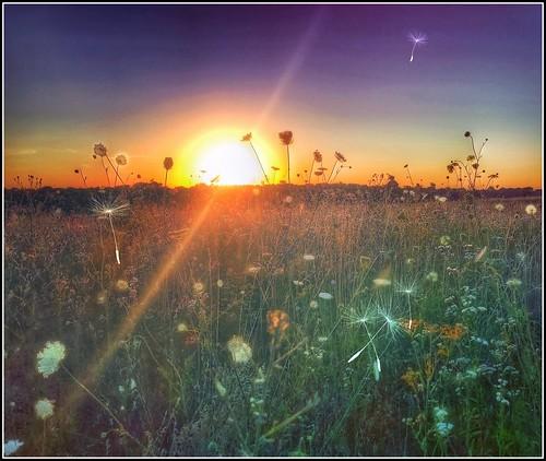 silhouettes wildflowers saharadustcloud sunset springfieldmissouri ozarks missouri