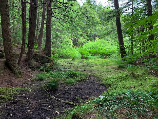 0:22:27 (27%): hiking lebanon newhampshire burntmountain bostonlot unitedstatesofamerica