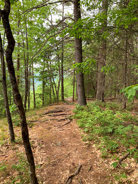 0:37:37 (45%): hiking lebanon newhampshire burntmountain bostonlot unitedstatesofamerica