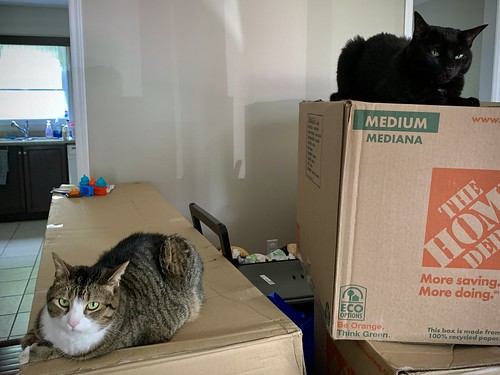 Cats on moving boxes