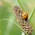 Sa, 20.06.20 - 15:30 - Ladybug Winterthur, Switzerland