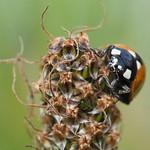 Sa, 20.06.20 - 15:29 - Ladybug  Winterthur, Switzerland
