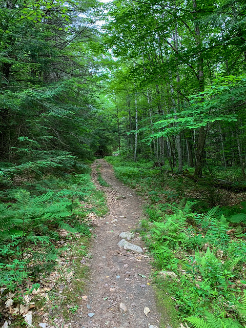 0:03:56 (5%): hiking lebanon newhampshire burntmountain bostonlot unitedstatesofamerica