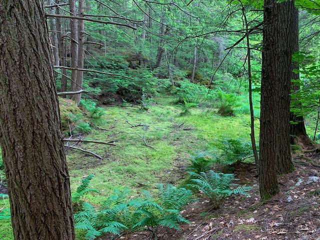 0:22:03 (27%): hiking lebanon newhampshire burntmountain bostonlot unitedstatesofamerica