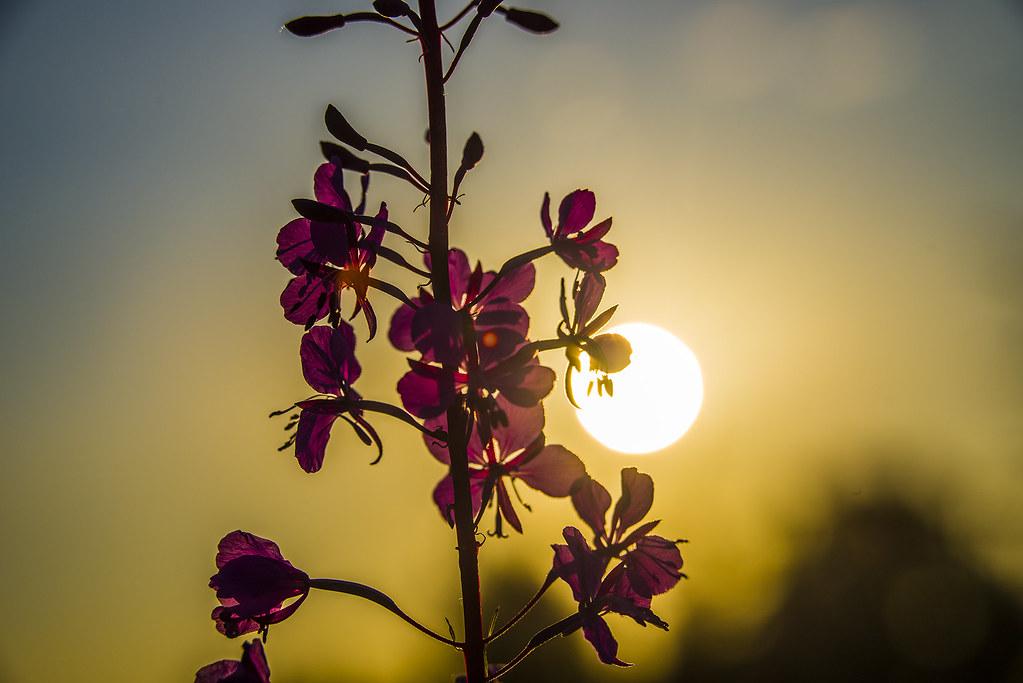 Цвет и свет.