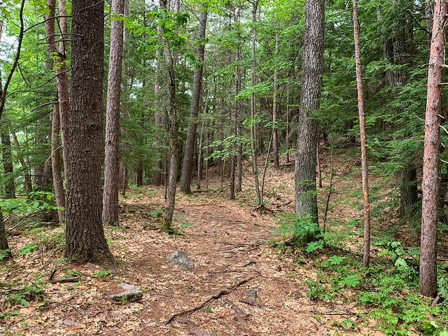 0:33:09 (40%): hiking lebanon newhampshire burntmountain bostonlot unitedstatesofamerica