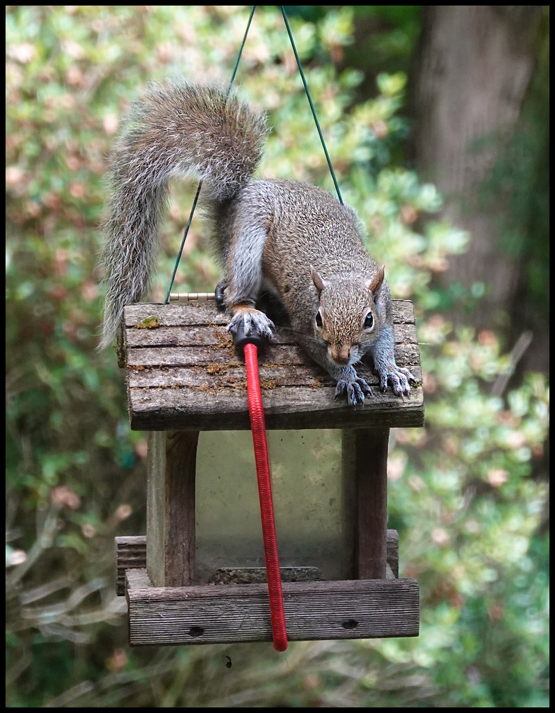 6-27-20 - This is MY feeder - 1