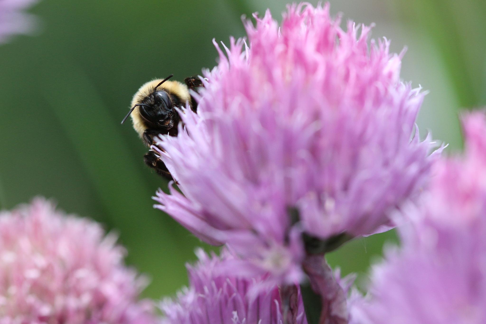 What's Buzzing? (SOTC 361/365)