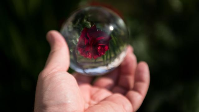 rose lensball