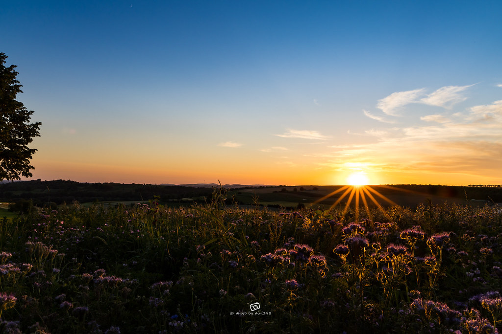 .: SUNSET FLOWERS :.