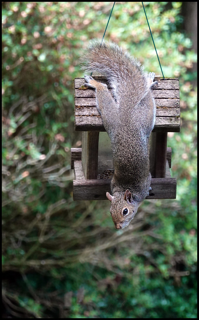 6-27-20 - This is MY feeder - 2