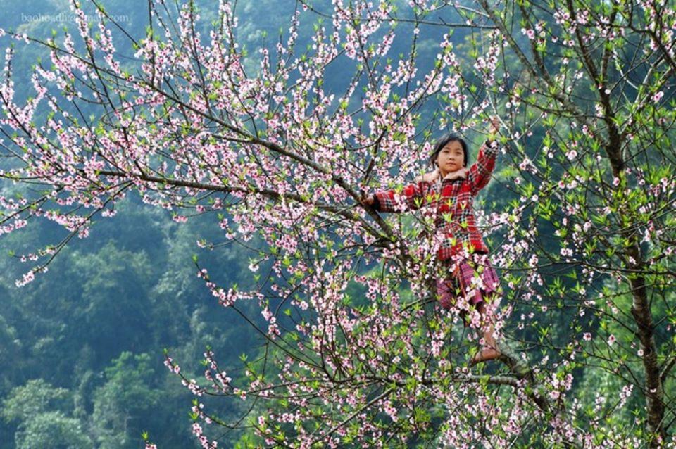 Dien Bien Phu のBan花