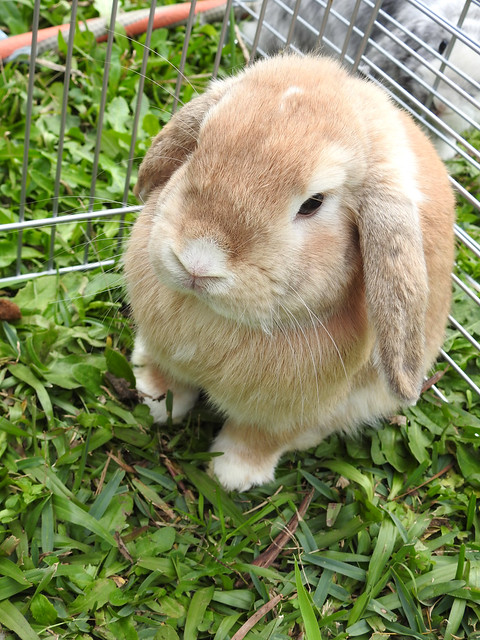 Billy Bob Rabbit