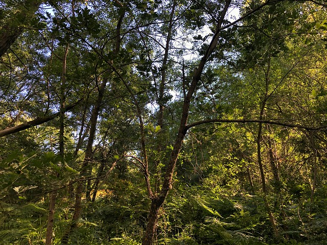 Árboles en el Camino Schmidt
