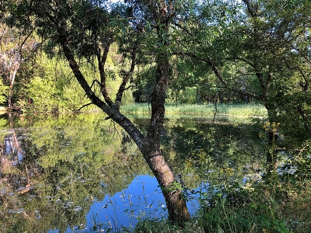 Bosque finlandés en Rascafría (Madrid)