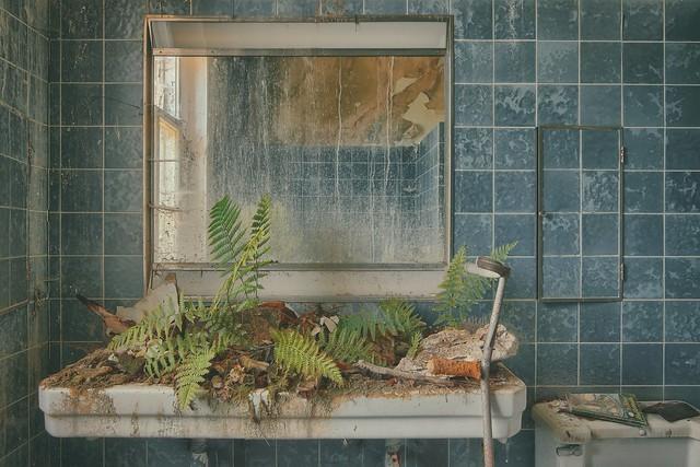 - fern pool -