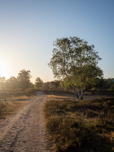 westerheide 2020 hilversum heath earlymorning dawn trees sunrise park backlight