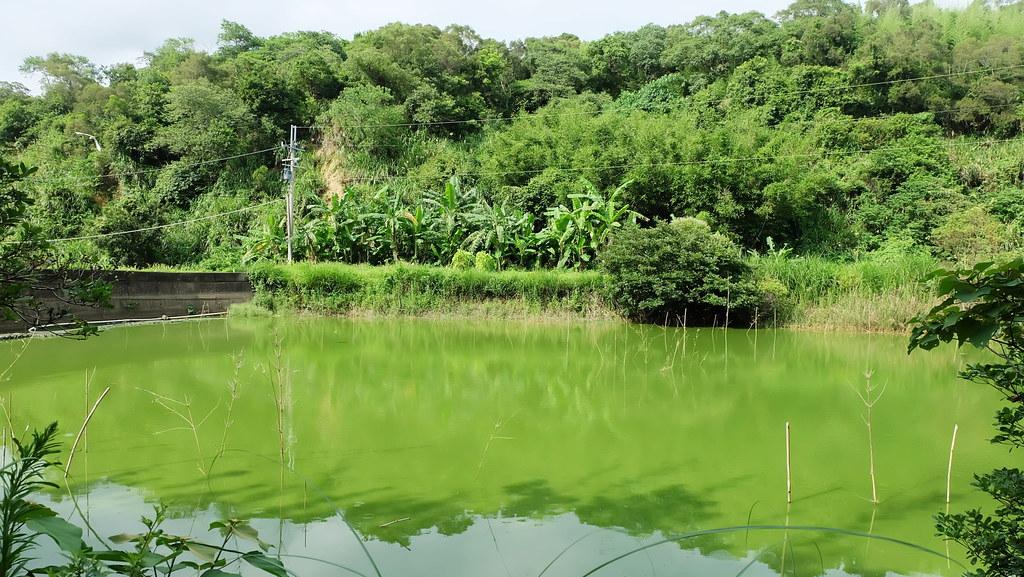 田鱉田旁的淺池不僅有過田鱉、也有許多野生動物利用。攝影:陳文姿