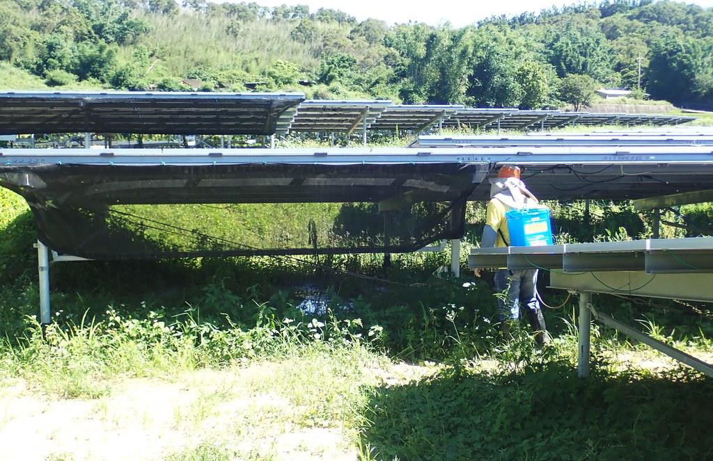 為防止雜草影響光電發電效益、工人正在噴除草劑。照片提供:李璟泓