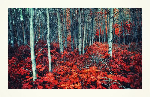 ... blue wood forest ... (Explored)