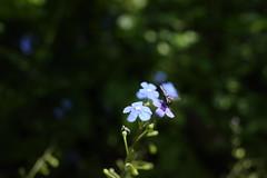 Duisburg Botanischer Garten, May 2019