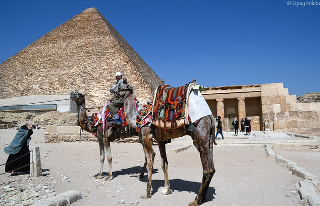 The man, the camel and the Pyramid