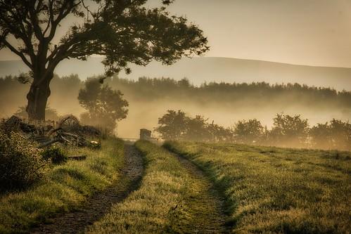 blue trees summer orange mist green june misty fog sunrise lowlight nikon foggy hills cumbria eden edenvalley summer2020 june2020 d7500