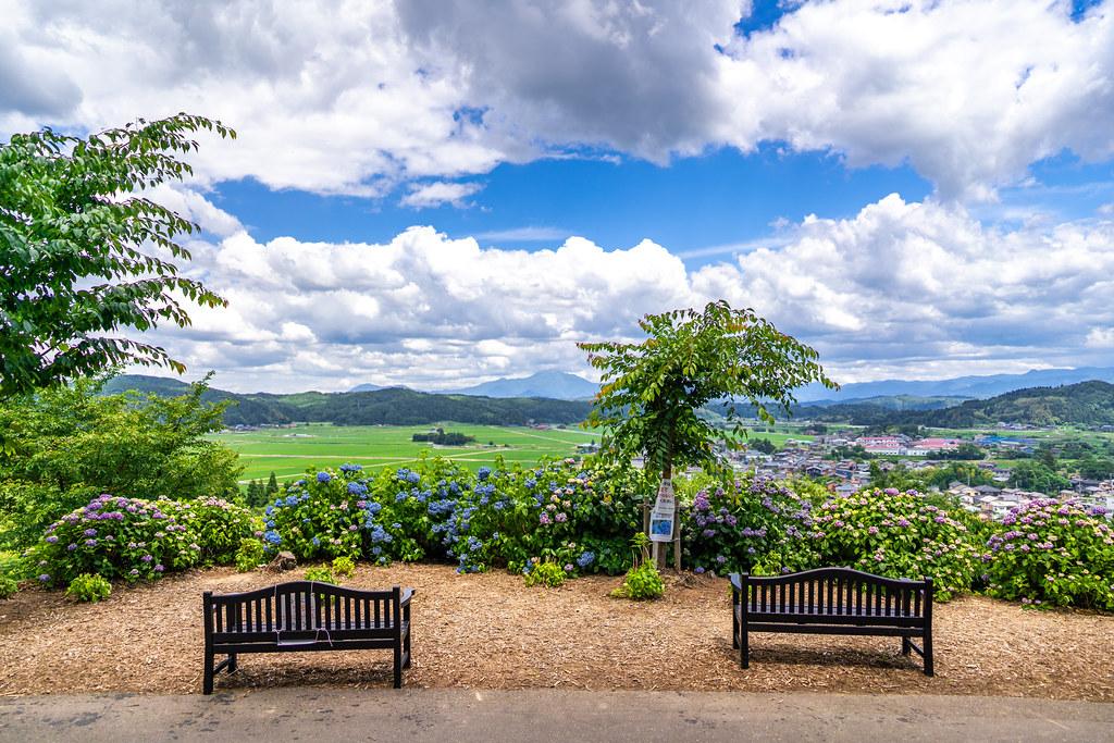 紫陽花の美しさ 水道山・観音山公園 見附市