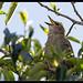 Garden Birds-1.jpg