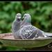 Garden Birds-2.jpg