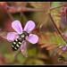 Bee Photos-10.jpg