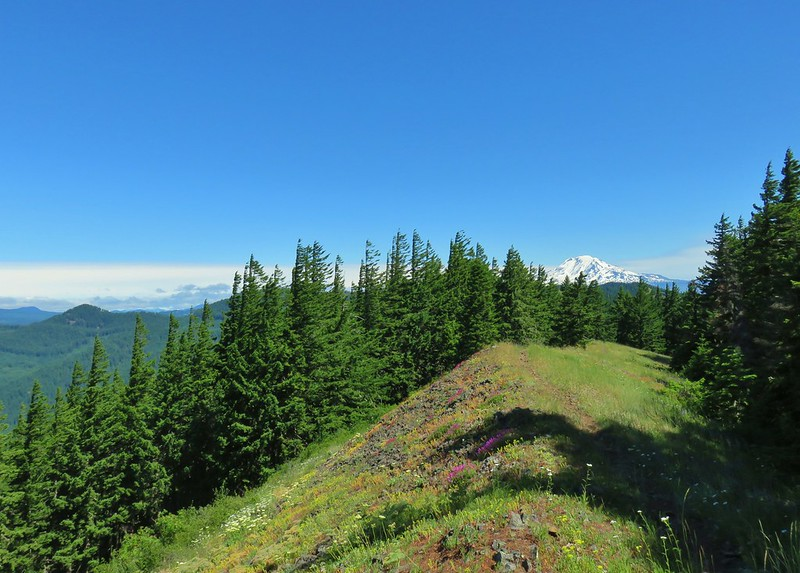 Mt. Adams from the Monte Carlo Trail